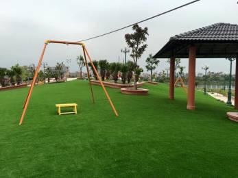 Cỏ sân vườn DL 45N